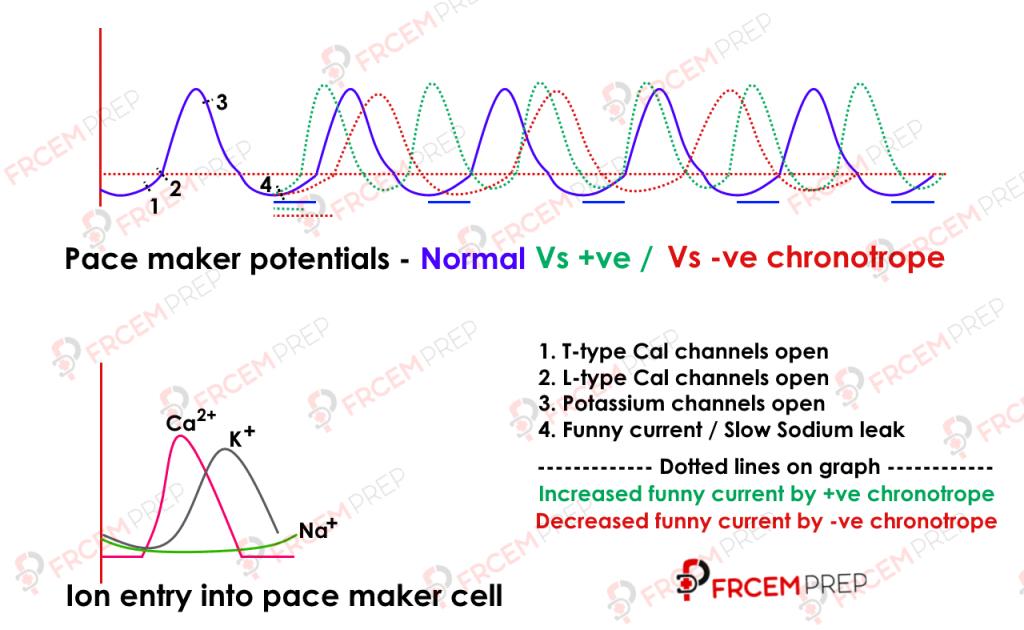 Pacemaker potentials